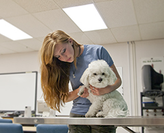 Veterinary Tech with dog.